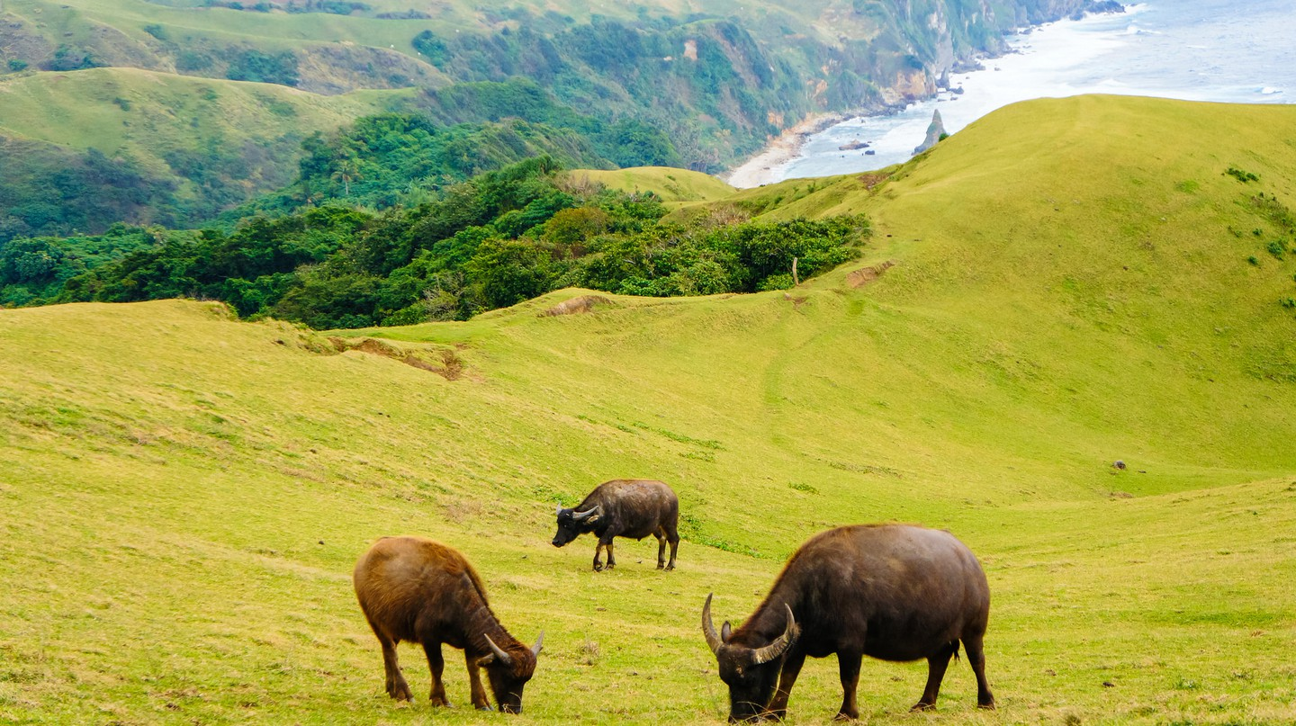Animals grazing in Batanes | © Camz Co/Flickr
