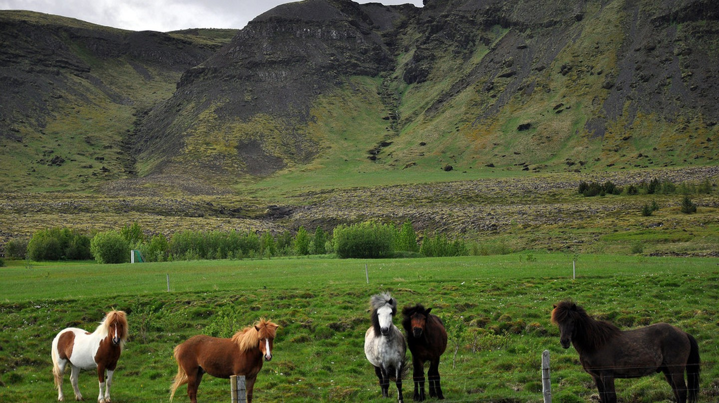 Icelandic Horses | © Jennifer Boyer/Flickr