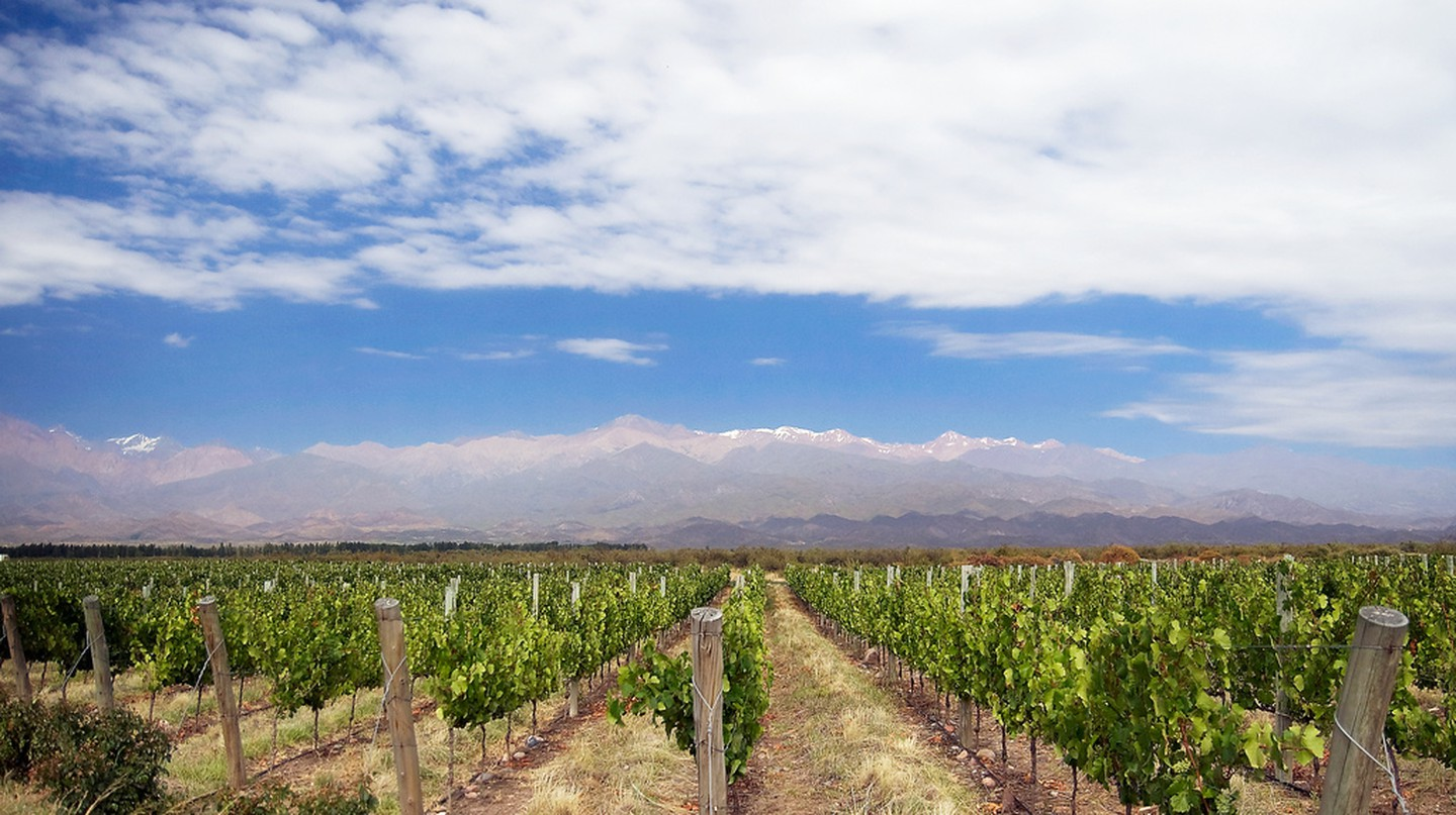 Vineyards in the Uco Valley, Argentina | © David/Flickr
