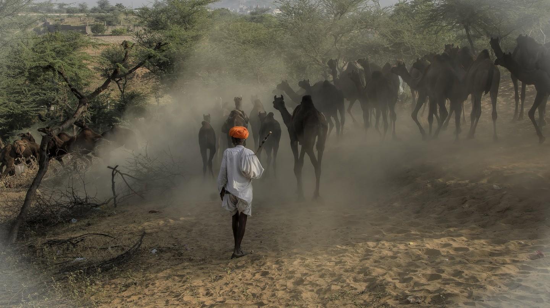 Puskar Camel Fair | © Arindam Mitra / Flickr