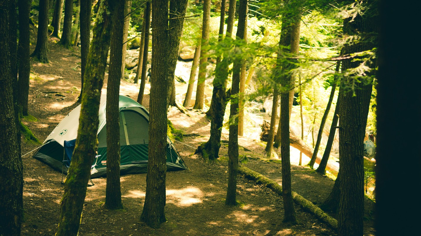 Camping in a forest / Pexels