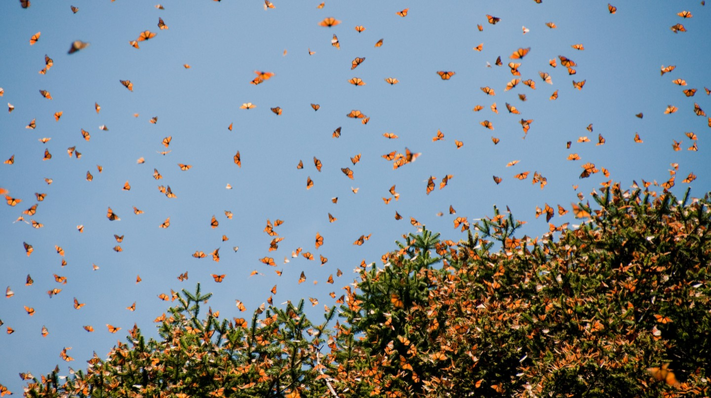 Monarch butterflies of Janitzio | © Noradoa/Shutterstock