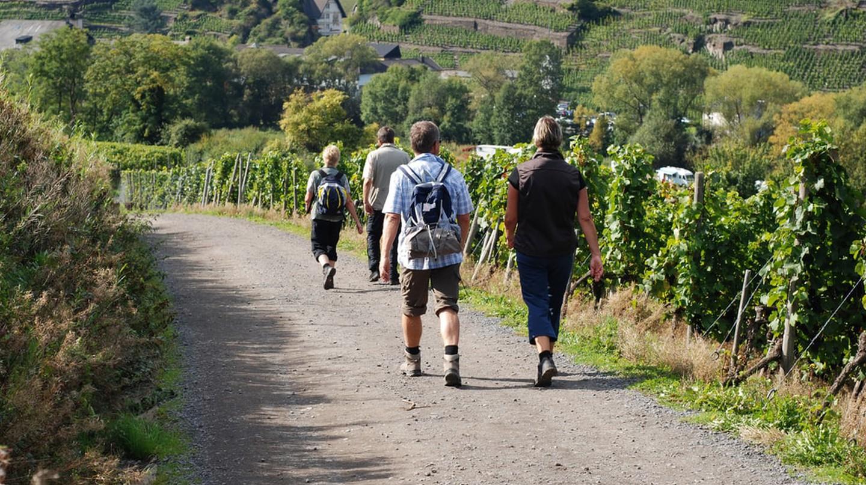 Hikers explore the vineyards of the Ahrtal | © Alan Gordine/Shutterstock