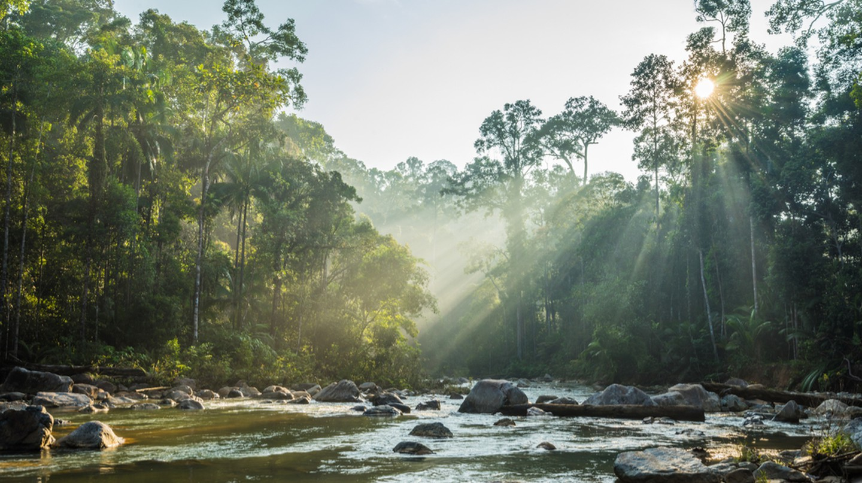Endau Rompin National Park in Johor | © shaifulzamri/Shutterstock