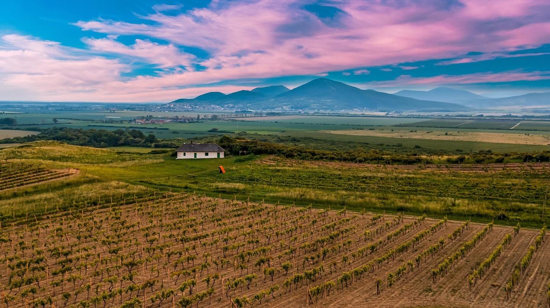 Vineyards in picturesque Tokaj, in south eastern Slovakia I © Walkerssk/Pixabay