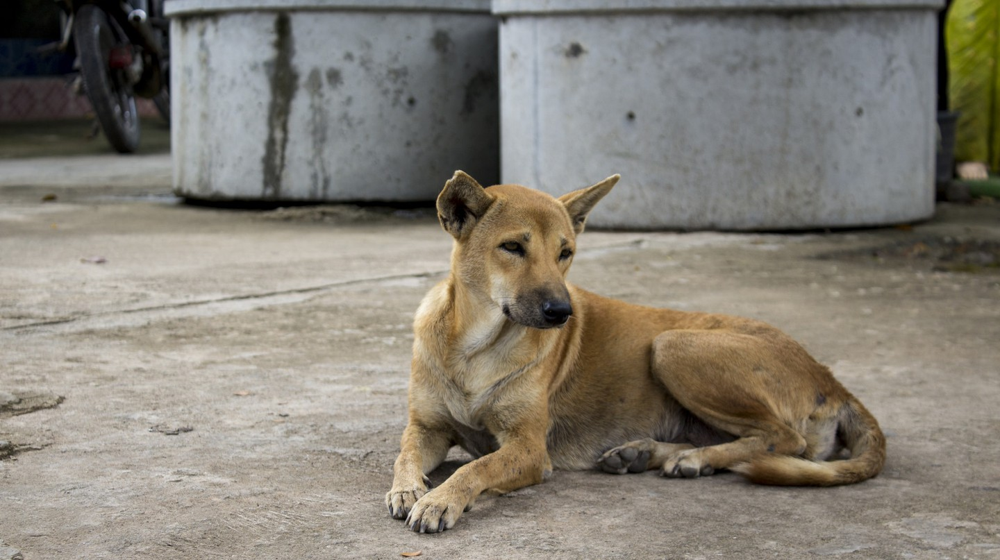 A local street dog | © Edahn Small/Flickr