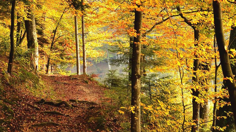 Medvednica autumn walk | © Raftrek Adventure Travel/Flickr