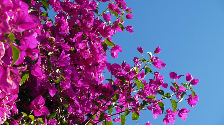 Brisbane in Spring   ©AdaMacey/Flickr