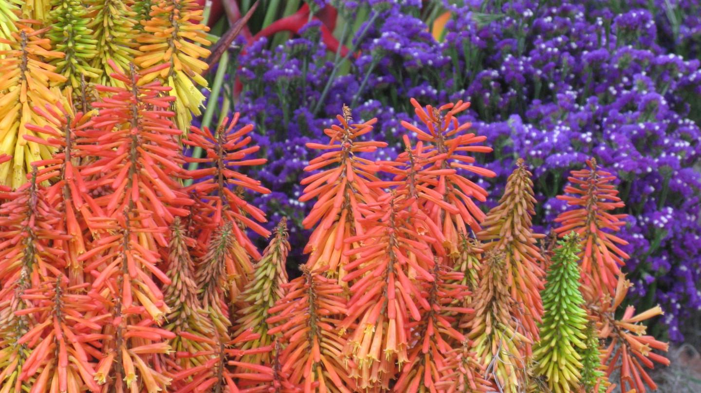 Medellin Botanical Gardens | © Luz Adriana Villa/Flickr