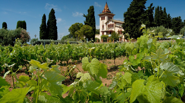 Tempranillo vineyards in Castillo y Leon, Spain. Photo © Wikimedia Commons