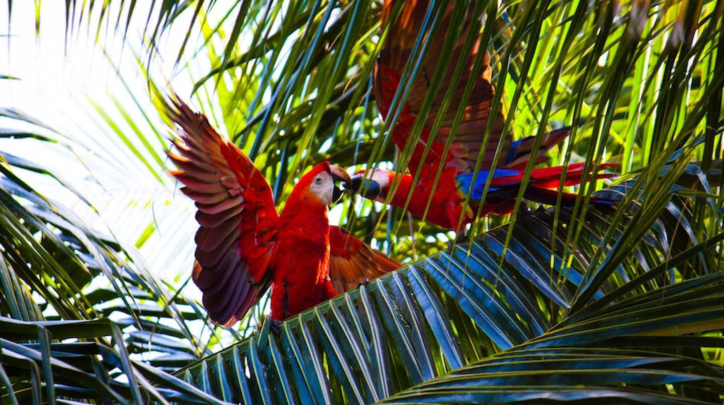 Go wild in Panama I © Debora Tingley / Unsplash