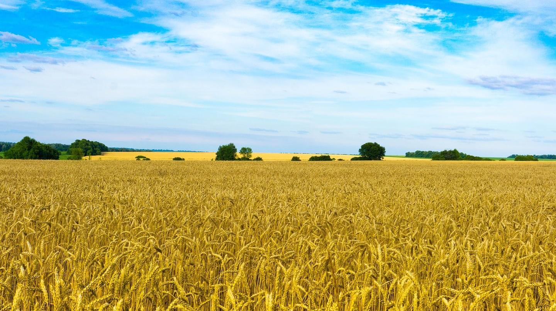 Ukrainian wheat fields | ©Alexeev_Alexey/Pixabay