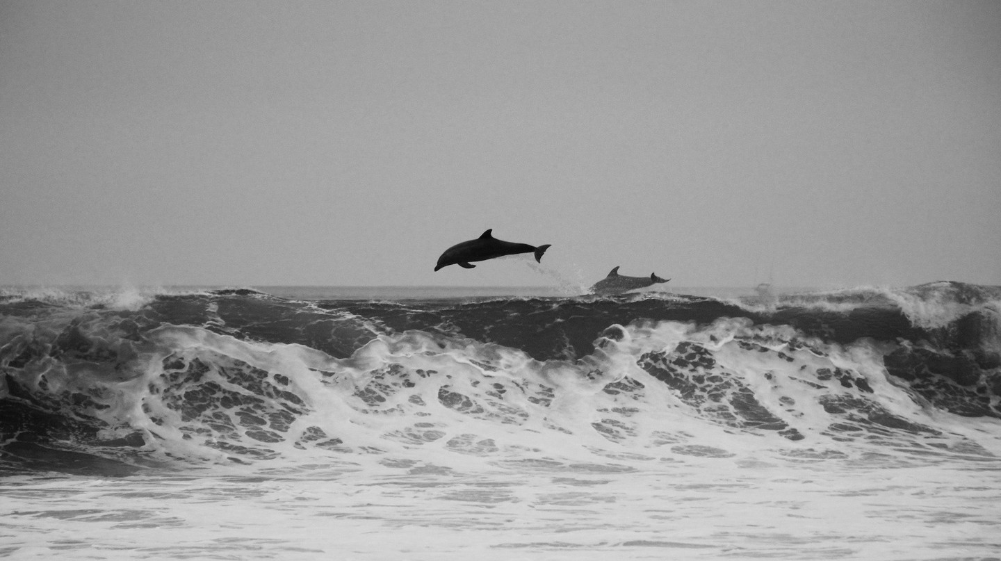 Dolphins jumping | © Jeremy Ricketts / Unsplash