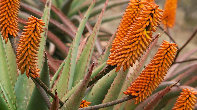 National Botanical Garden | © Leo za1/Wikimedia Commons