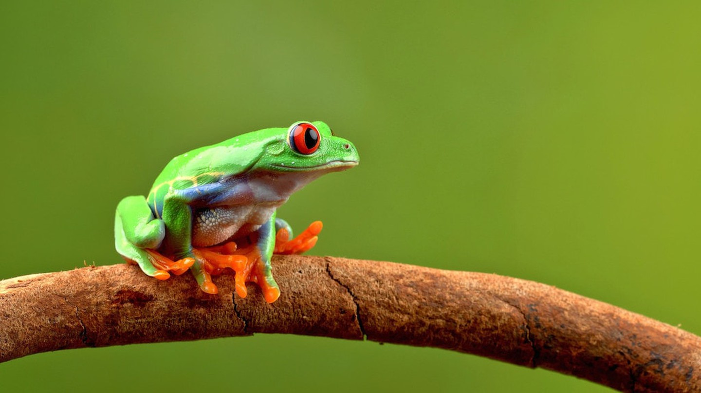 Rainforest mascot | © Tom Lee / Flickr