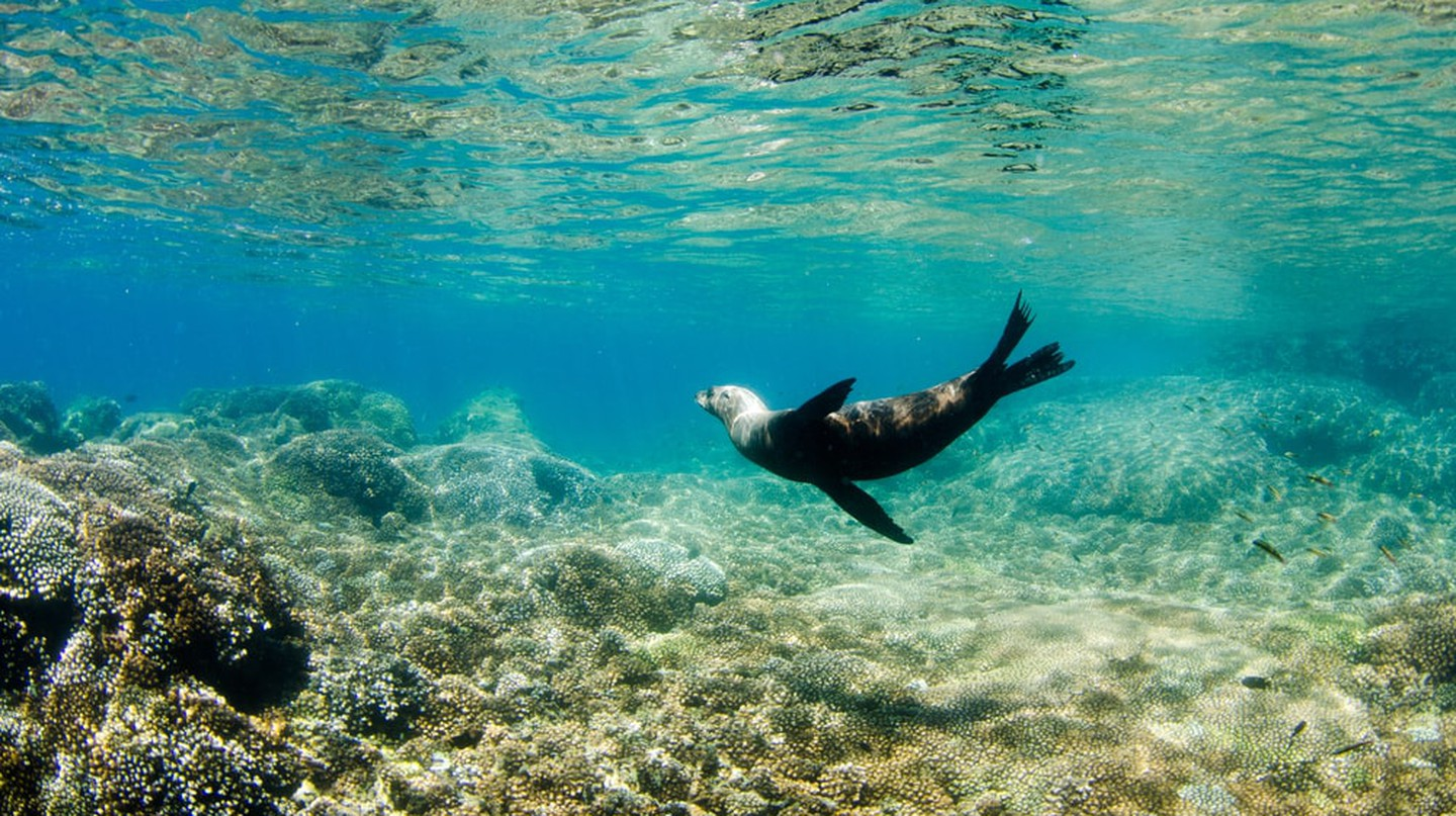 Californian sea lion off the coast of Isla Espíritu Santo, Baja California Sur | © Leonardo Gonzalez / Shutterstock