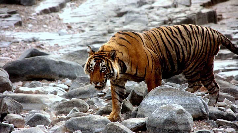 © Mahajanva76 / Wikimedia