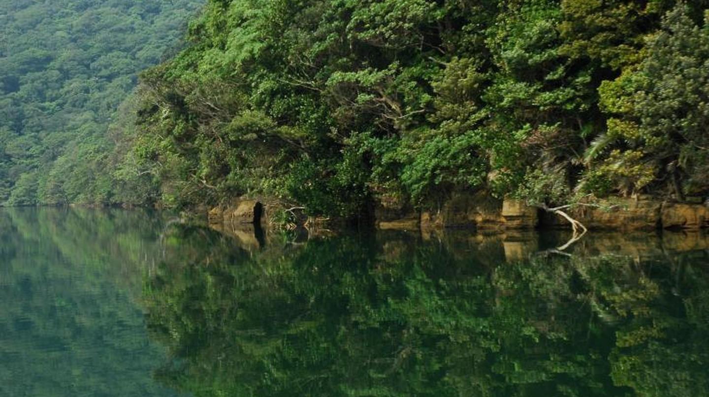 Urauchi River, Iriomote, Japan |  ©  (WT-en) Jpatokal at English Wikivoyage