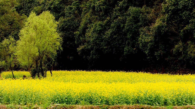 Wuyuan, Jiangxi | ©llee_wu/Flickr