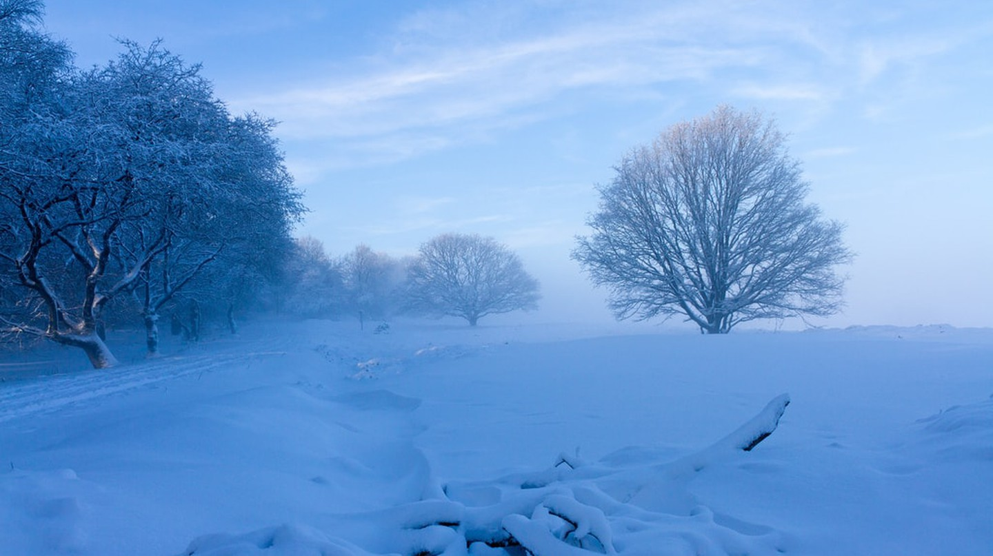 Another shot of de Veluwe after snowfall |© Doggettx / Flickr