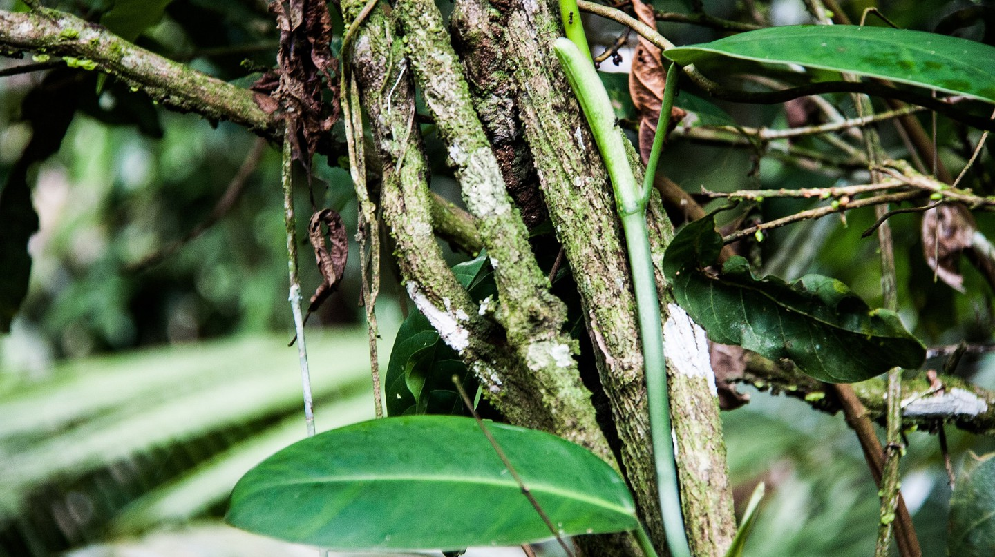 7 Natural Potions From the Magical Amazon Forest That Will Amaze You