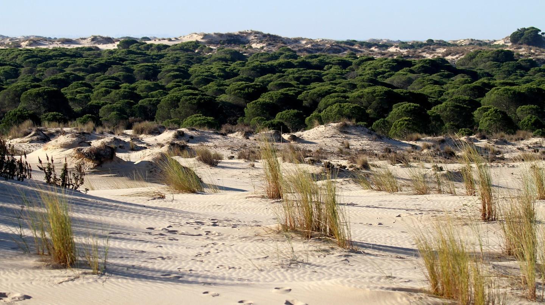 Desert-like teraain in the Doñana National Park near Seville; BarbeeAnne/pixabay