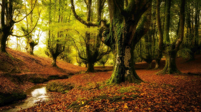 Otzarreta forest|©Armando Gonzalez Alameda/Wikipedia Commons