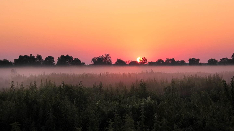View across a field in Ukraine   © Olena Klen/WikiCommons