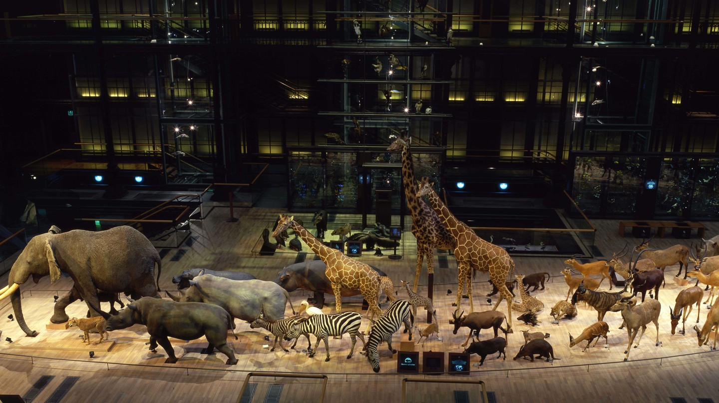 GGE Caravane Africaine in the Grand Gallery of Evolution |Courtesy of Muséum national d'Histoire naturelle