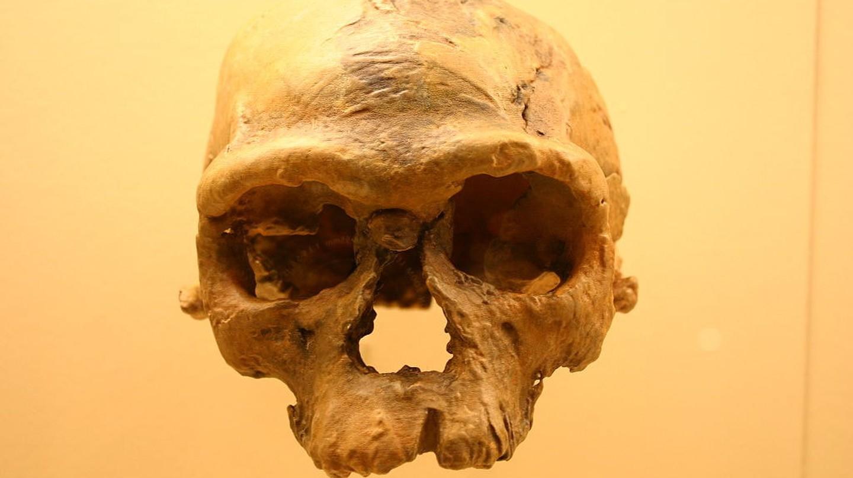 Fossil of Jebel Irhoud   ©  Ryan Somma/WikiCommons