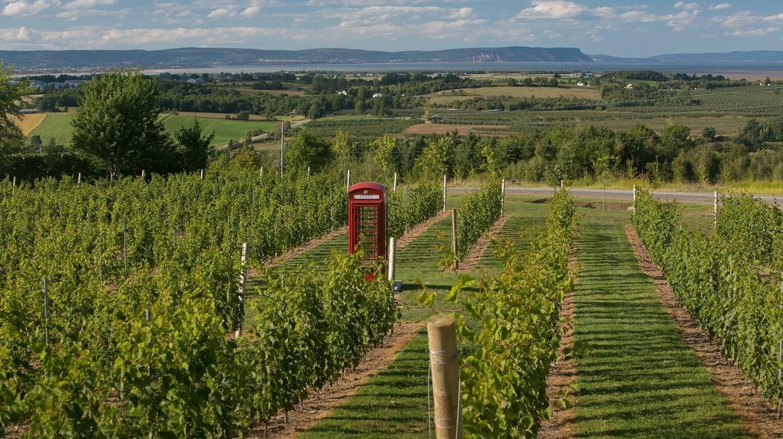 Luckett Vineyards | Courtesy of Luckette Vineyards