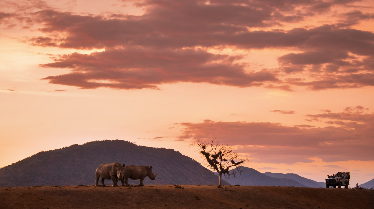 Rhinos in the Kruger National Park, South Africa | Courtesy of South African Tourism