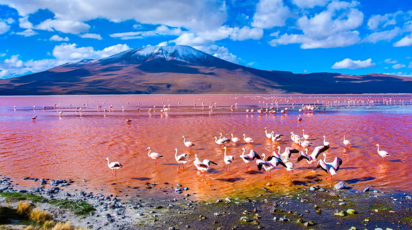 Flamingoes in Laguna Colorada, Uyuni, Bolivia