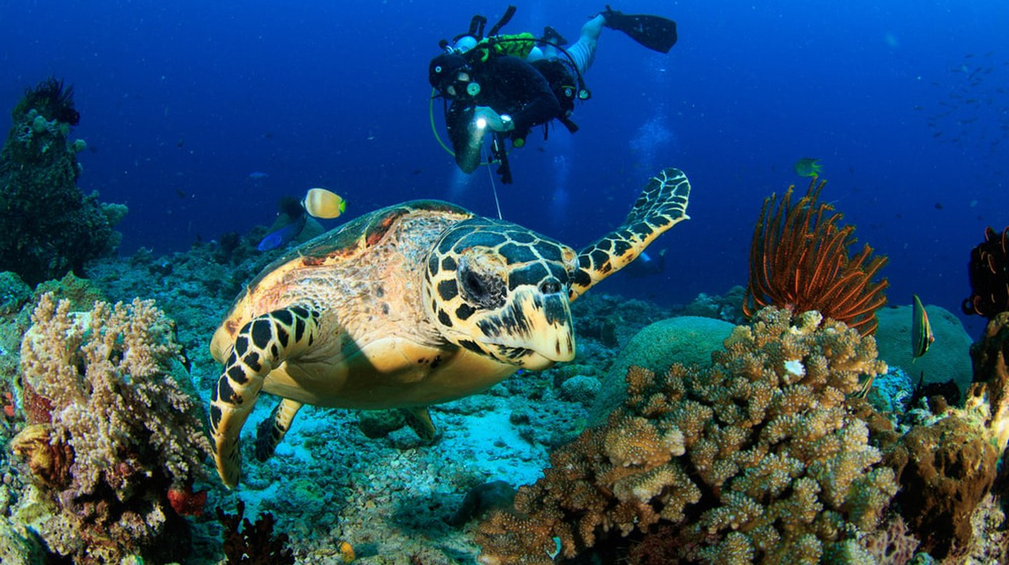Diving with sea turtles in Raja Ampat | © SergeUWPhoto / Shutterstock