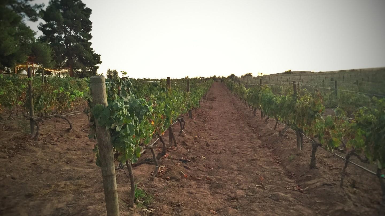 Mexican vineyards │© T. Tseng / flickr