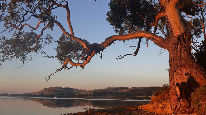 Eucalyptus | © Ed Dunens/Flickr