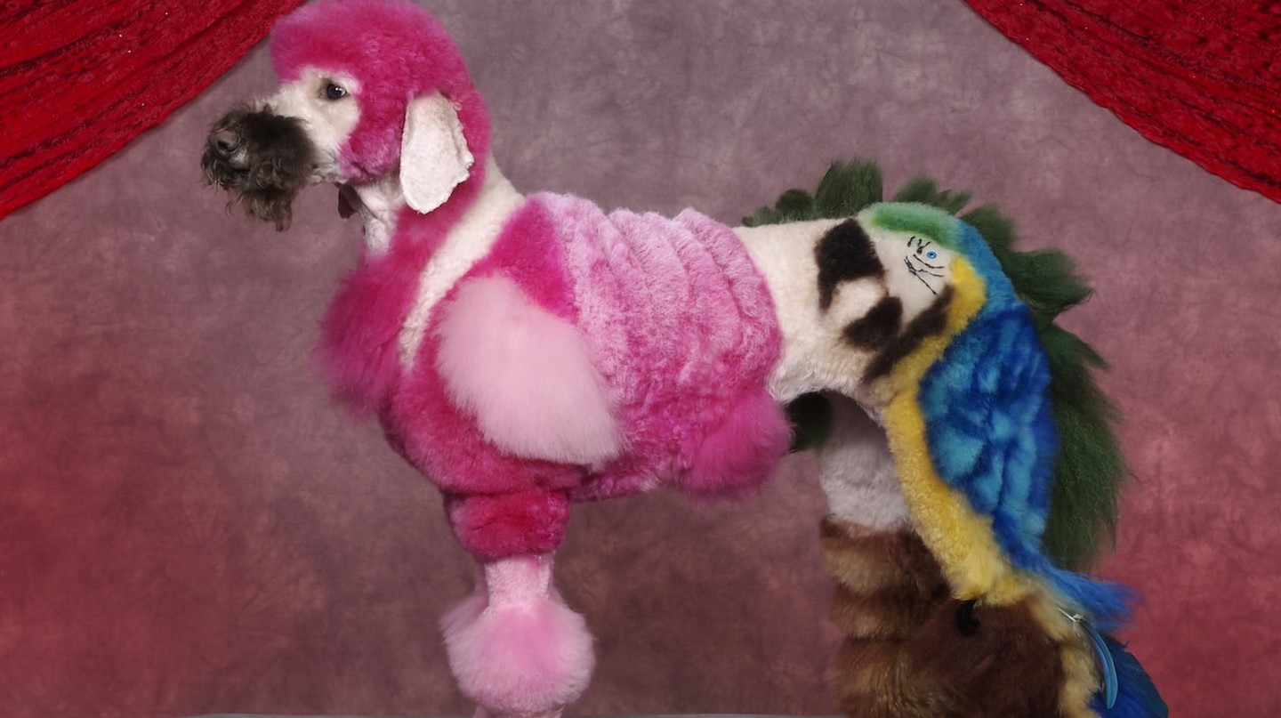 Art or Pure Evil? Extreme Dog Grooming Is Here!