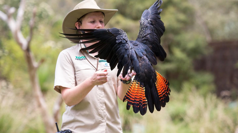 Bird talk  | Courtesy Healesville Sanctuary