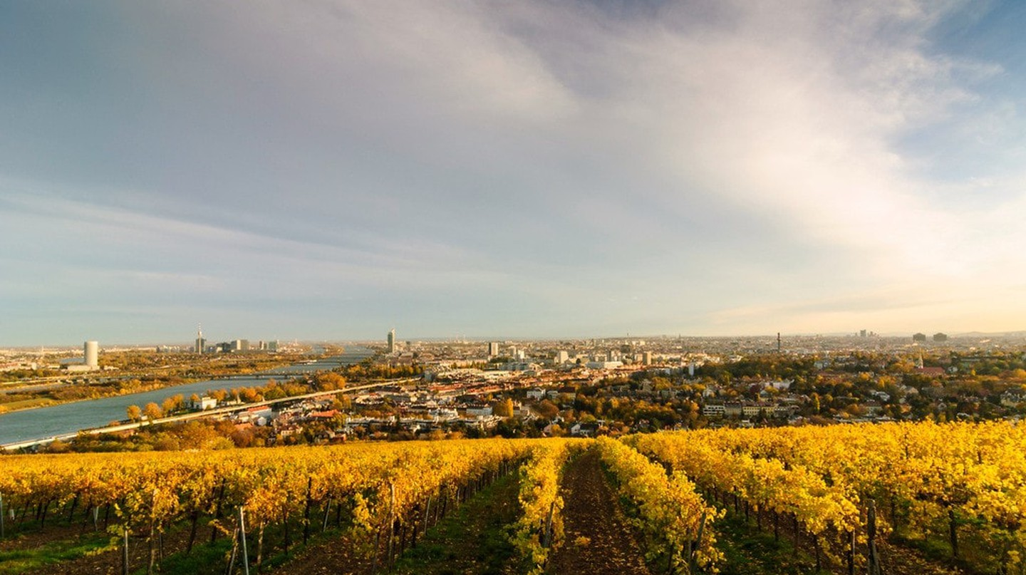 View from the vineyards | © Vienna Tourist Board
