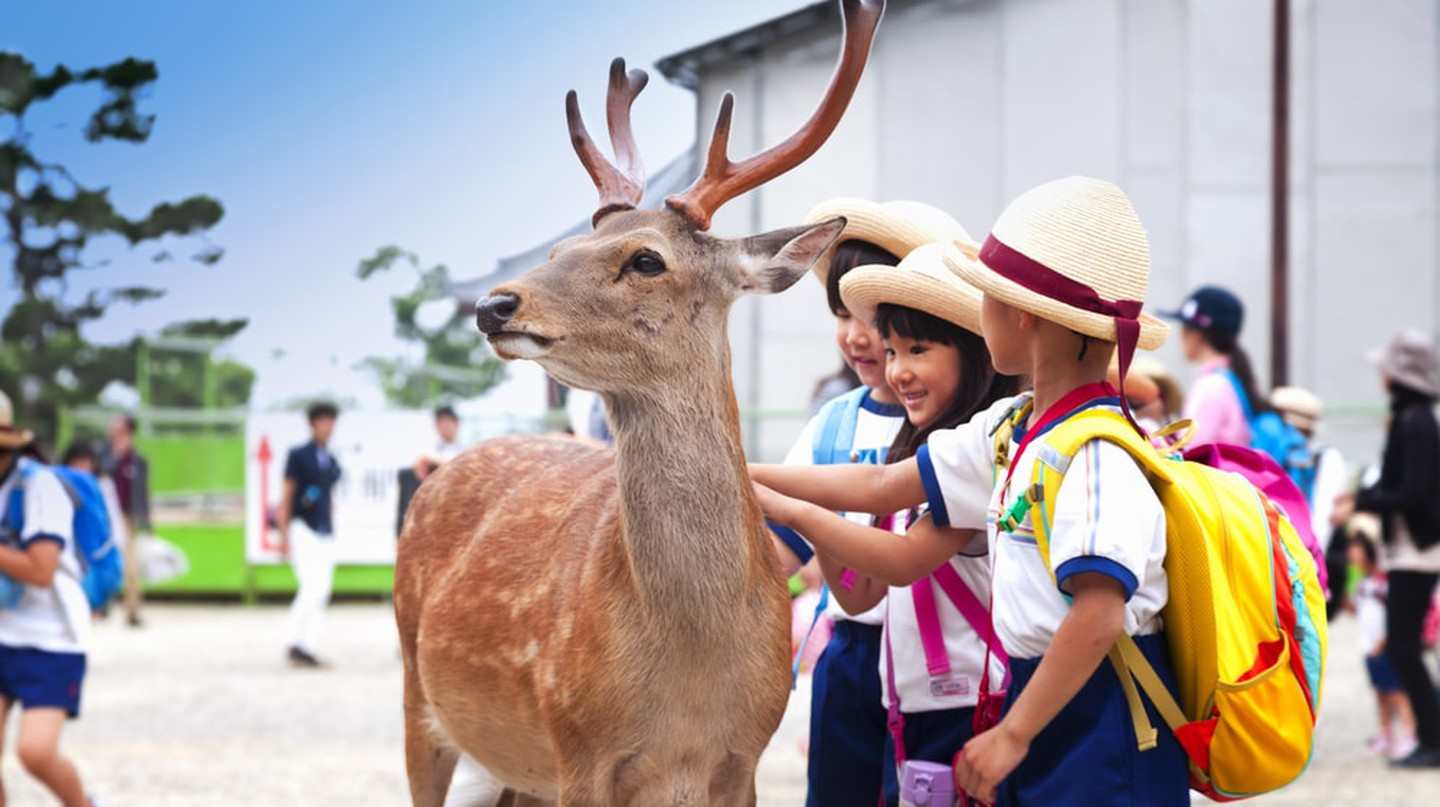 Japan was made for kids | © oleandra / Shutterstock