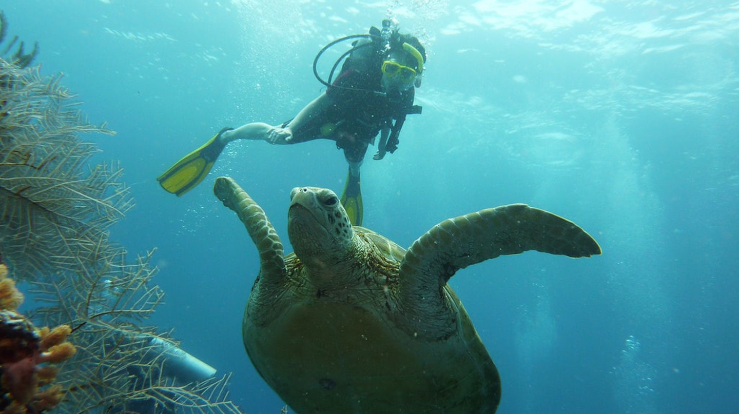 Snorkelling and scuba diving in Malaysia's tropical islands © Paul Lim/Flickr