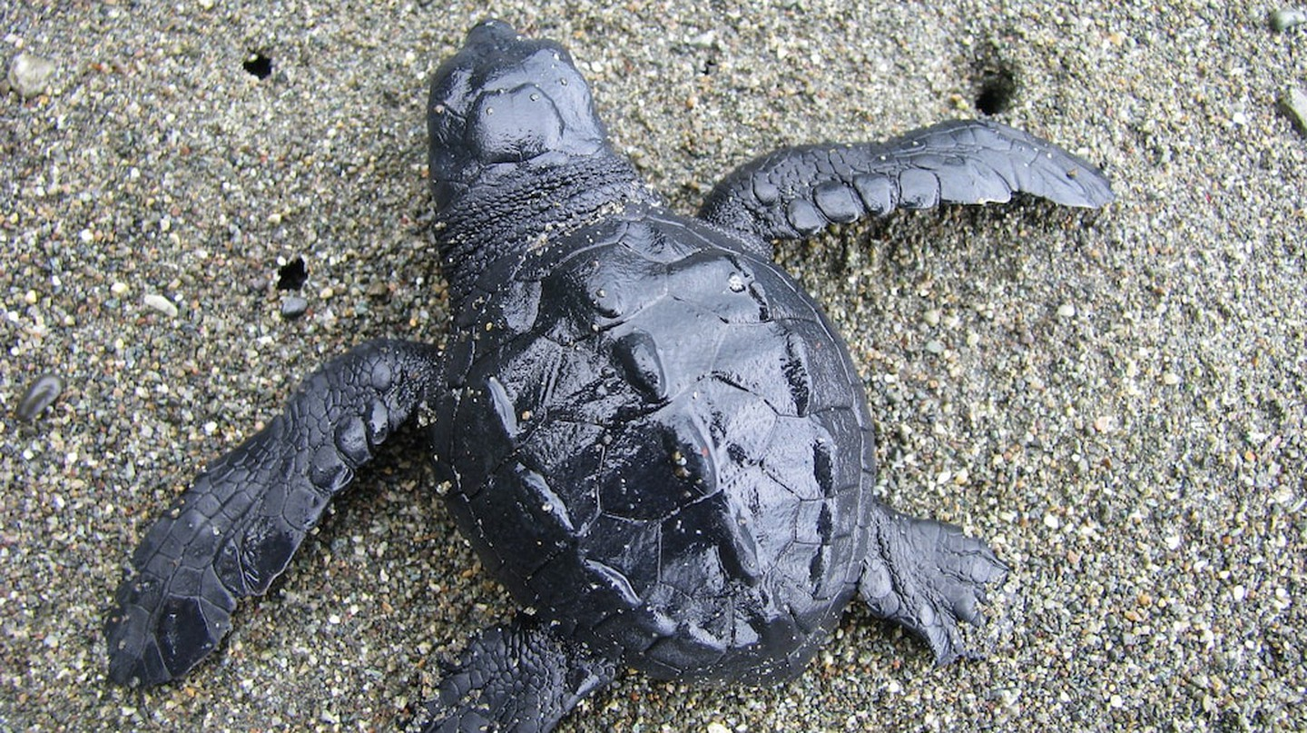 Where to Watch Sea Turtles Hatch in Central America