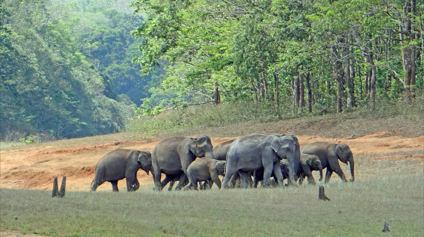 Elephant herd at PNP