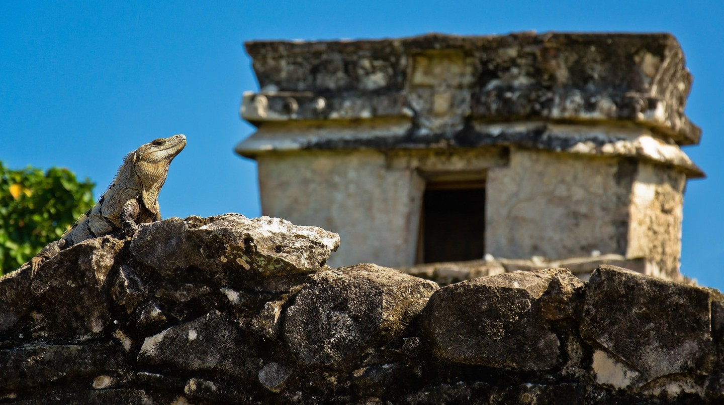 Iguana in Tulum ruins | © Guillén Pérez / Flickr