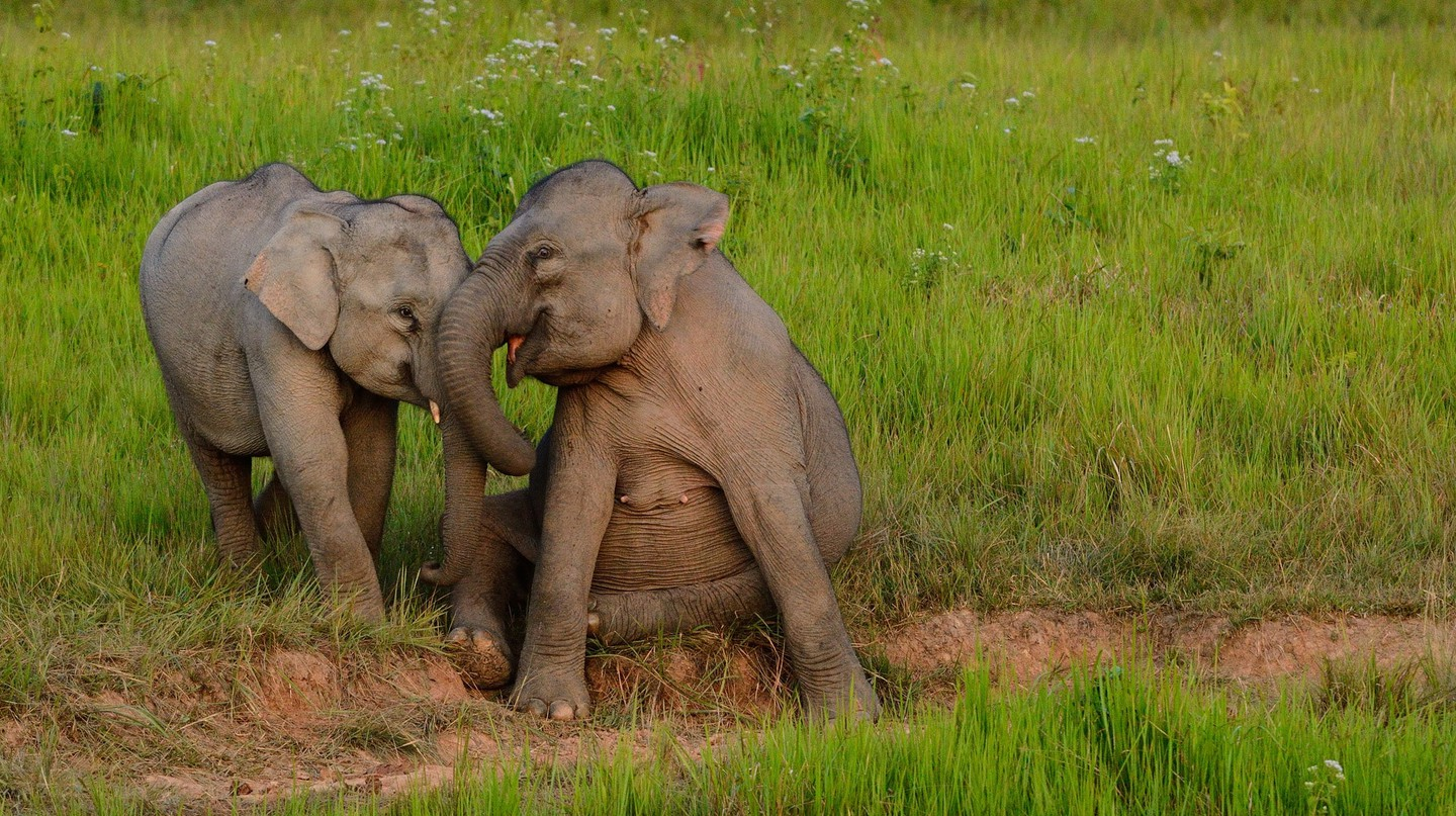 Happy elephants | © tontantravel/Flickr
