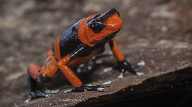 Colombian wildlife | © Sebastian Moreno / Flickr