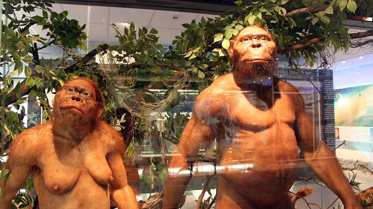 Hominid models at the Sterkfontein visitors centre | © flowcomm/Flickr