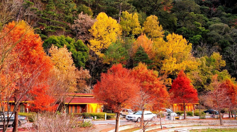 Autumn Trees in Taichung | © Arlene Hsu / Flickr