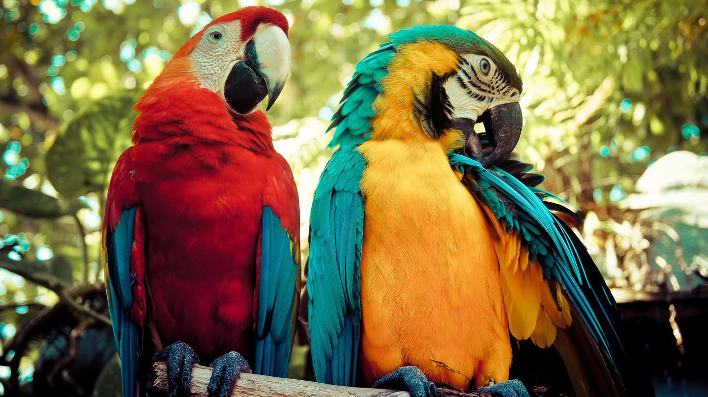 Birding in Colombia   © Maria Grazia Montagnari / Flickr