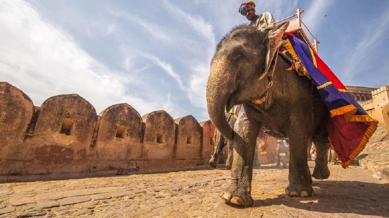 Elephant ride in Rajasthan | © C Rayban / Unsplash